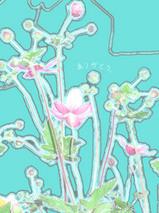 080429_flower