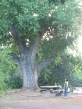 071113sedona_tree