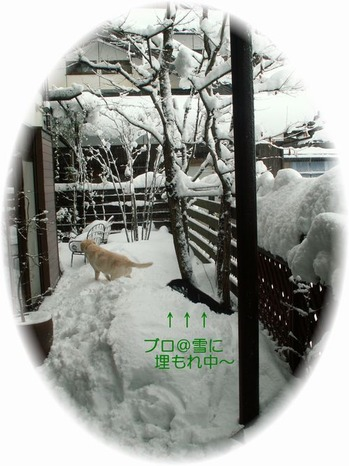 PICT0029