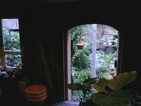 苔丸 中庭