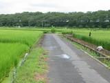 それっぽい農道