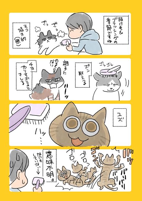 猫10記事
