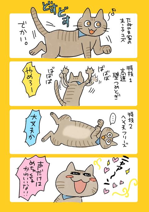 猫10記事4