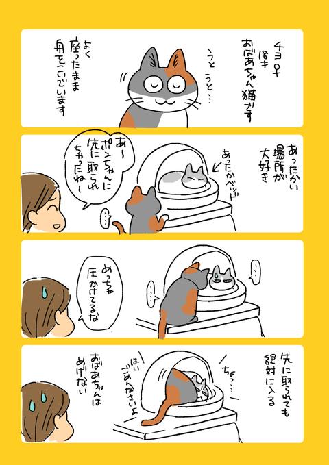 猫10記事5