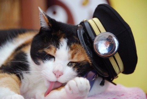 三毛猫の「たま駅長」死去 16歳 急性心不全で-和歌山電鉄