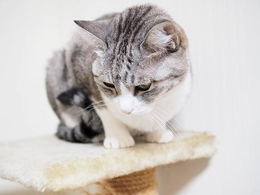 伏せ目がちの猫
