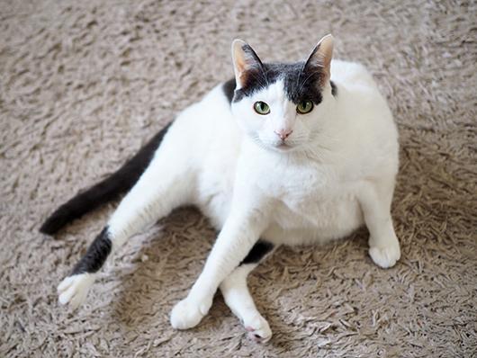 まん丸な猫