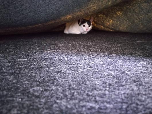 ラグの下の猫