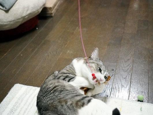 喰らいつく猫