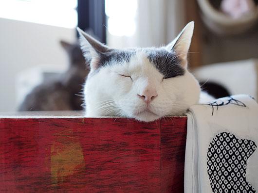 爪とぎサークルの猫