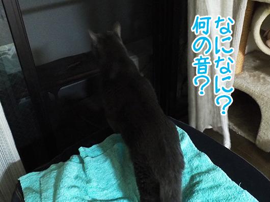 身を乗り出す猫