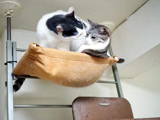まとわりつく猫