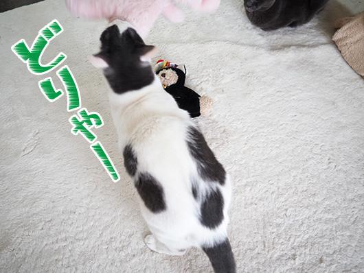 投げ飛ばす猫