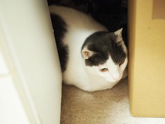 台風に怯える猫