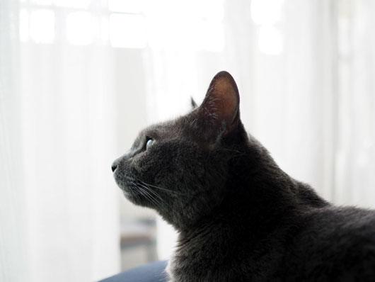 外を楽しむ猫