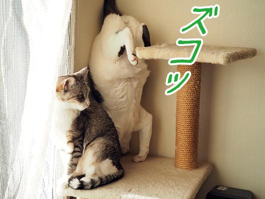 落っこちた猫