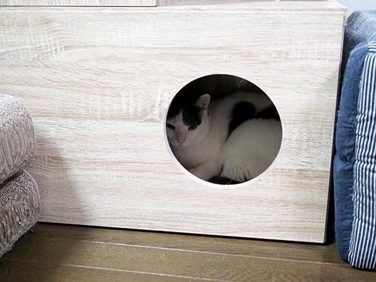 非難する猫