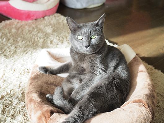 キャットベッドの上の猫