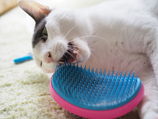 噛みつく猫