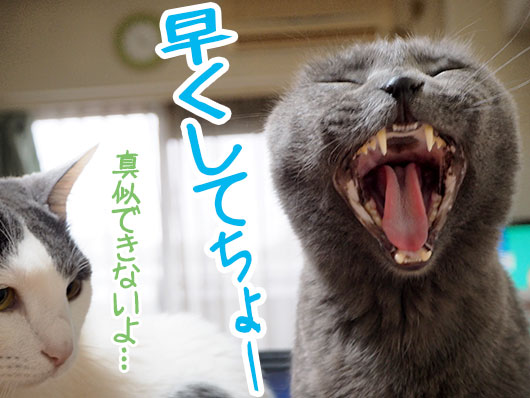 催促する猫
