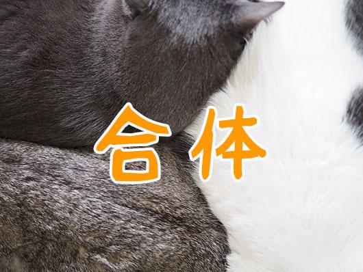 合体する猫