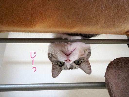 上から覗く猫