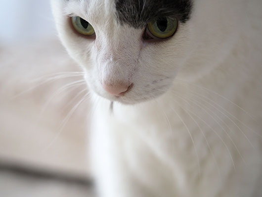 ケンカの後の猫