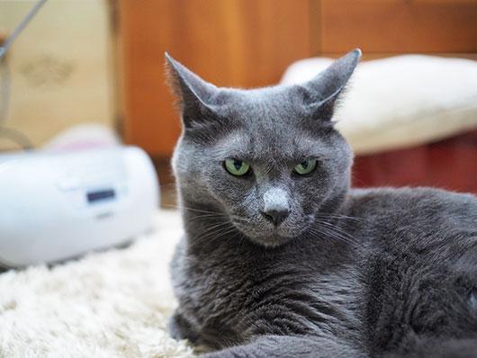 ラジオを聴く猫