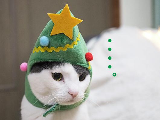 クリスマスツリー猫