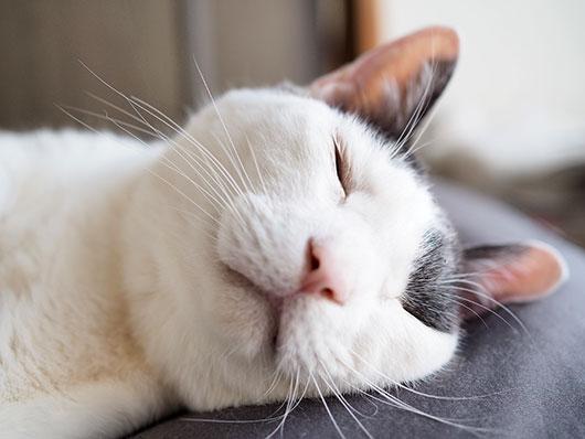 ヘン顔の猫