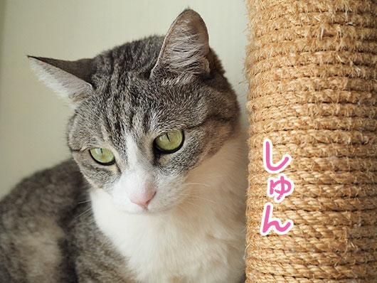 しゅんとする猫
