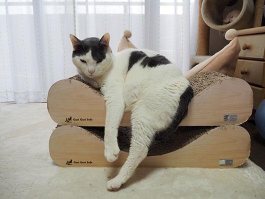 爪とぎソファに乗る猫