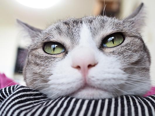 ドアップな猫