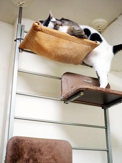 頂上へ登る猫