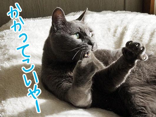 気合いの入った猫