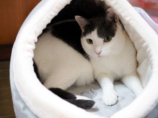 キャットハウスで休む猫