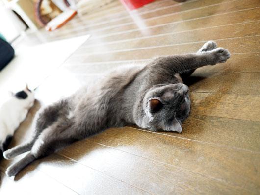 ねじくれた猫