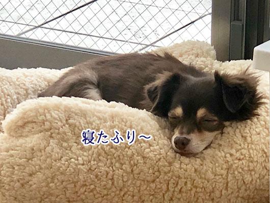 寝たふりをする犬