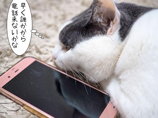 スマホ好きの猫