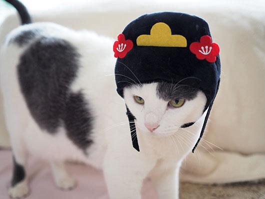 ひな祭りの猫