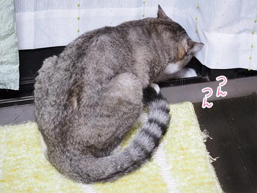 窓の外が気になる猫