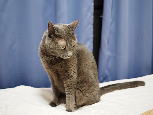 ビビリな猫