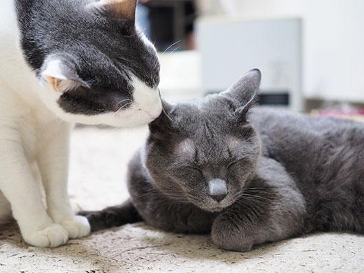 語りかける猫