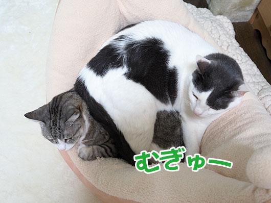 潰されている猫
