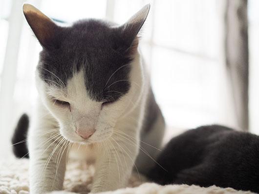モミモミする猫