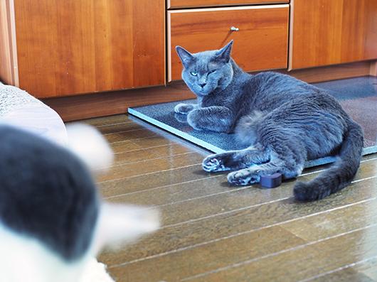 御影石と猫