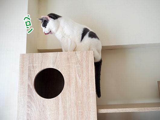 キャットタワーの上の猫