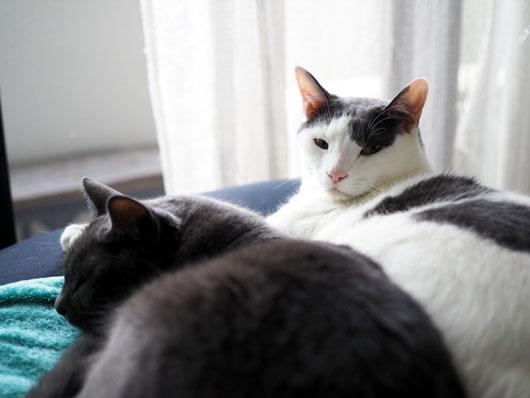 仲良しの猫