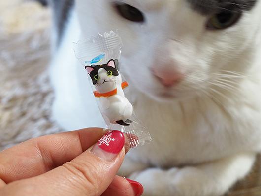 招き猫チョコと猫