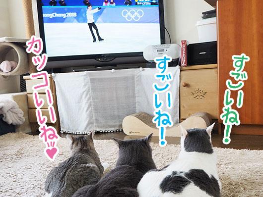オリンピックを観る猫